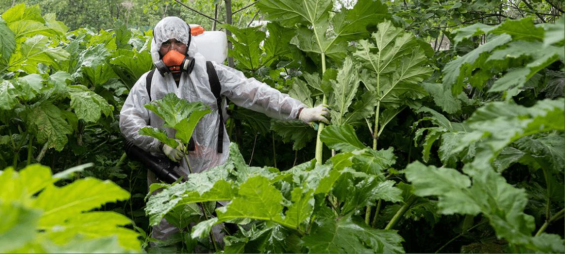 Самые опасные растения
