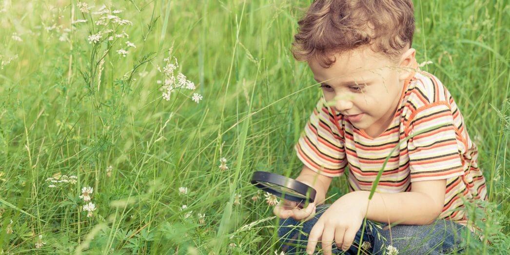 Интересные факты о насекомых для детей