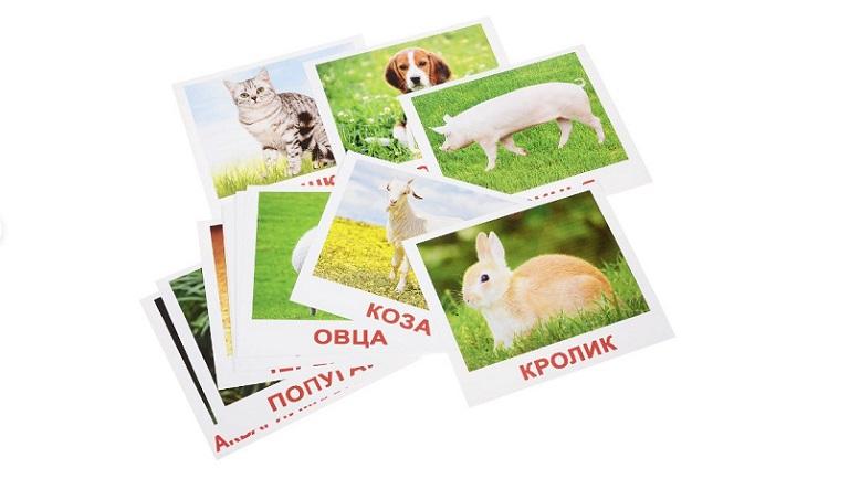карточки домана с животными