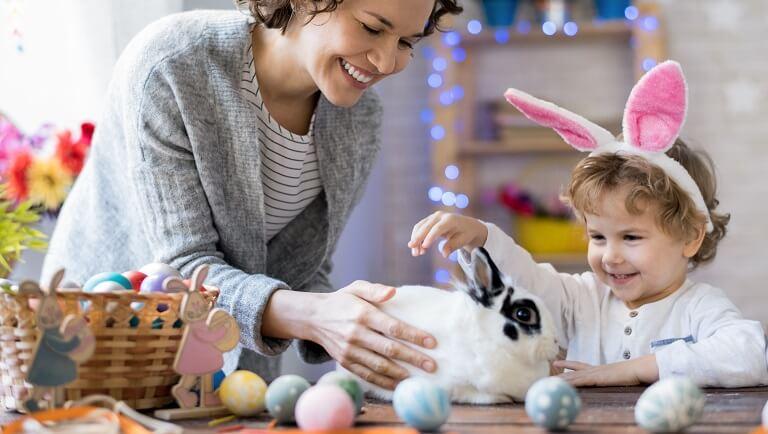 кролик в качестве домашнего любимца