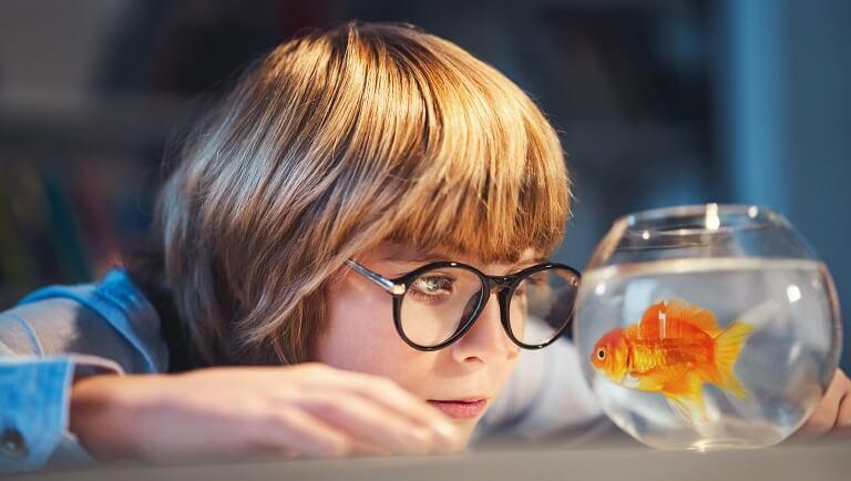 ребенок наблюдет за рыбкой в аквариуме