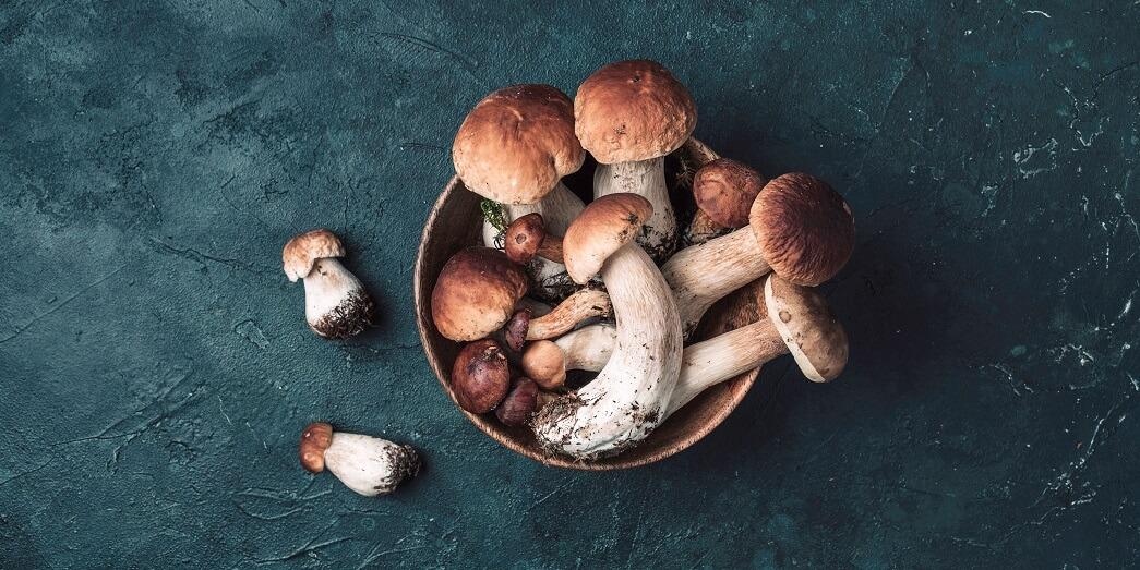 Детям про грибы