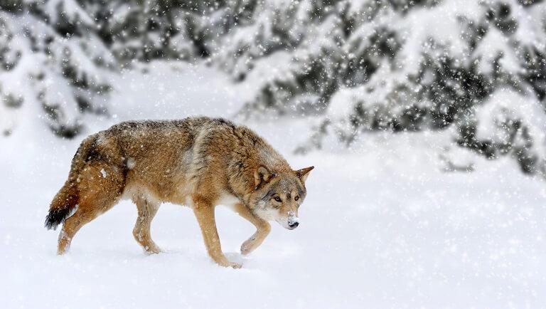 загадки про животных леса