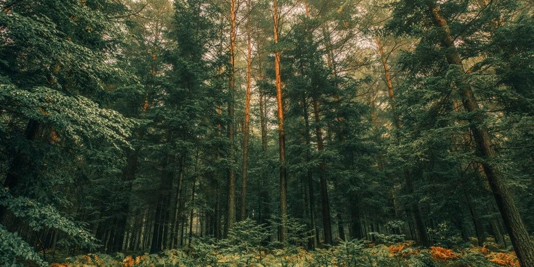 Детям про деревья