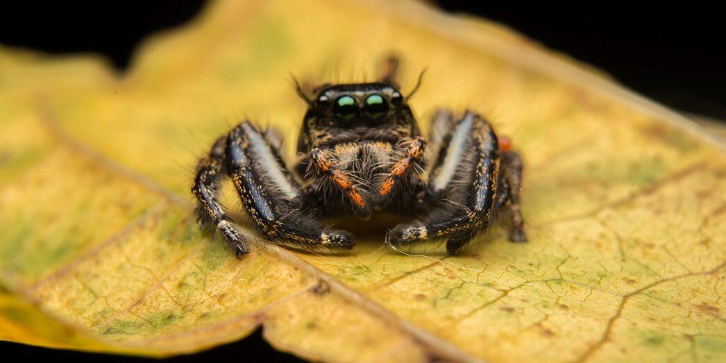Интересное о пауках для детей