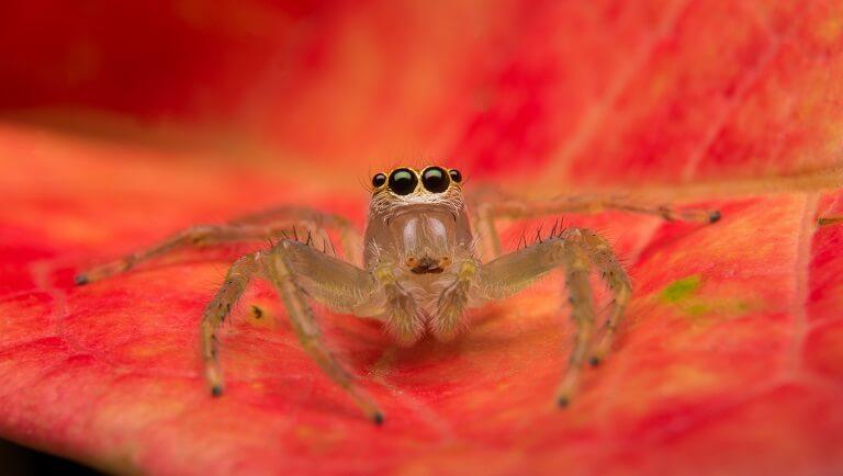 интересные факты о пауках для детей